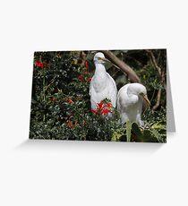 Cattle Egrets (Bubulcus Ibis) Greeting Card