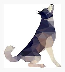 Husky Dog Illustration Photographic Print