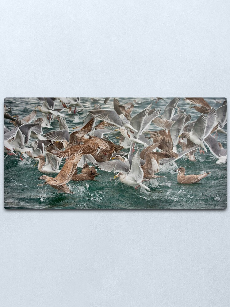 Alternate view of Lunch on the Strait Metal Print