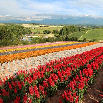 Rainbow Fields of Biei Hokkaido by dennischoong