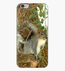Western Grey Squirrel In A Tree iPhone-Hülle & Cover