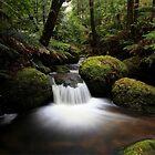 Cristmas creek .southface road Mt Baw Baw by Donovan Wilson