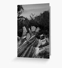 Gnarled Wood Greeting Card