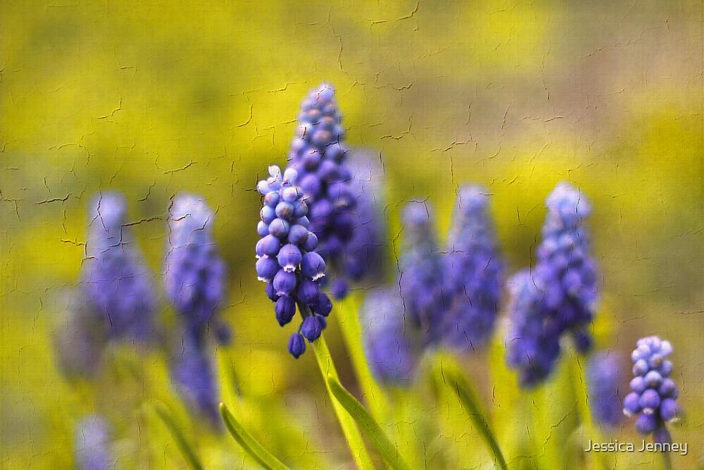 Grape Hyacinth by Jessica Jenney