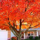 This Gorgeous Autumn Tree by LaurelMuldowney