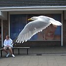 155 - BEDFORD STREET, NORTH SHIELDS - SEAGULL (D.E. 2008) by BLYTHPHOTO