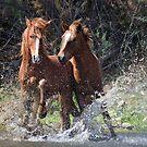 Running Wild  by Saija  Lehtonen