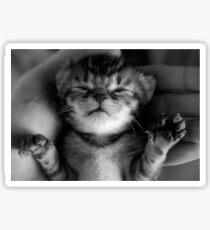 Precious Kitten Sticker