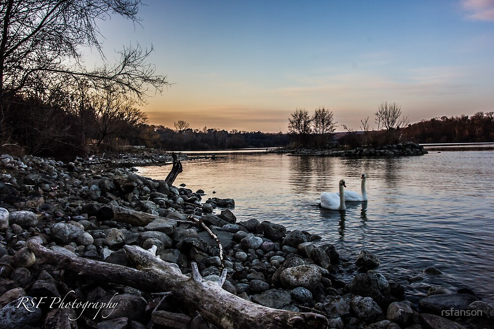 Swans at Dusk by rsfanson