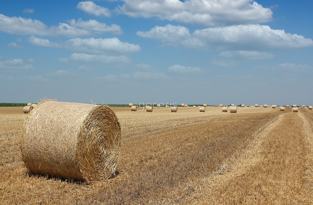 field with straw bale agriculture industry by goceris