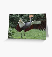Crownd Crane  (Balaerica regulorum) Greeting Card