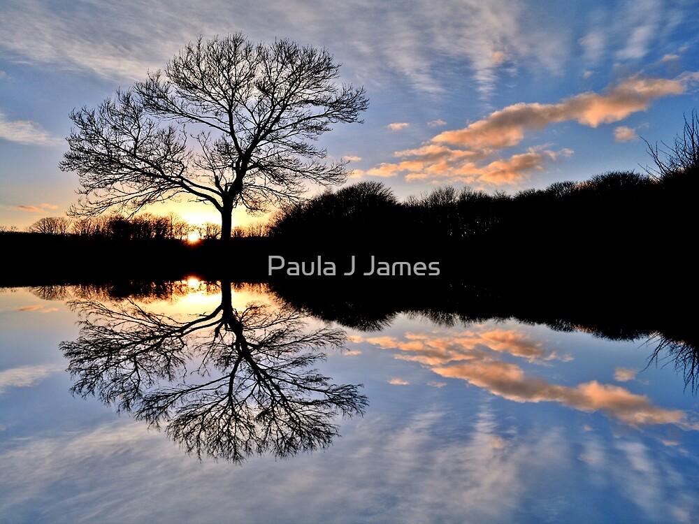 Tree Reflections at Sunset by Paula J James