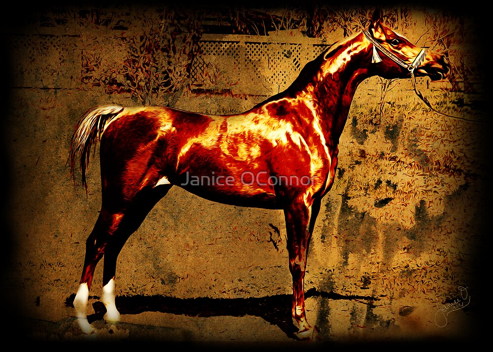 The Chestnut Colt by Janice O'Connor