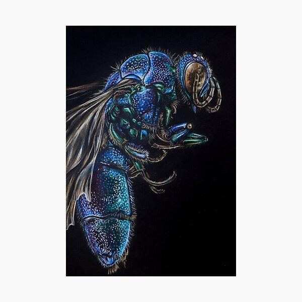 Chrysidid Wasp Hyper realistic Illustration Photographic Print