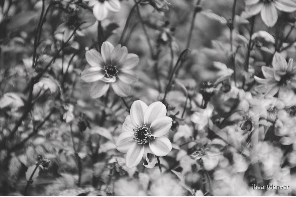 Striped Flower by iheartdenver