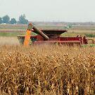 It's harvest time. by natgirl73