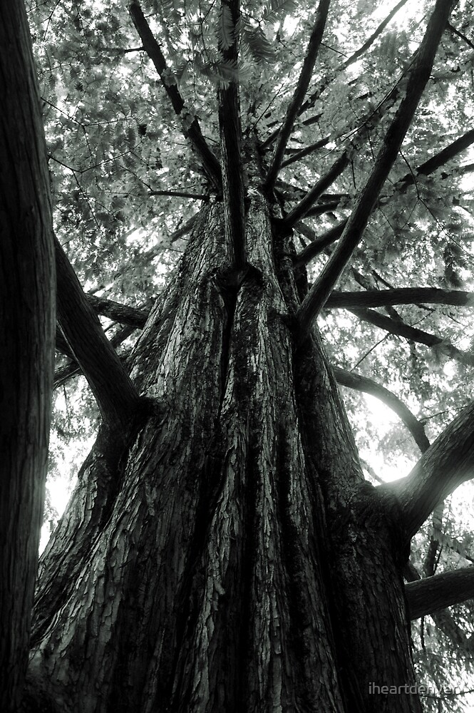 The Great Tree by iheartdenver