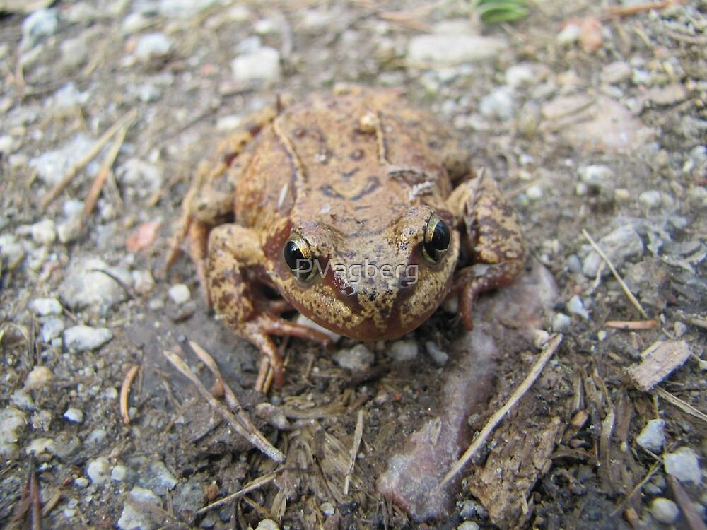 Curious frog by PVagberg