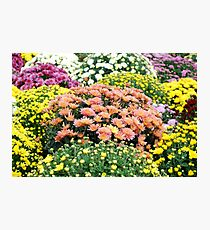 autumn colorful flower Photographic Print