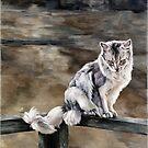 Night Cat by JolanteHesse