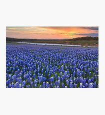 Texas Bluebonnet Images - Bluebonnet Sunrise in Texas Photographic Print