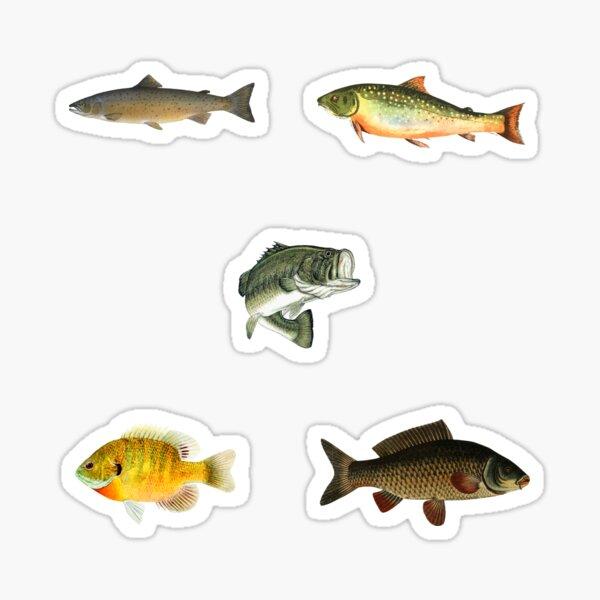 Freshwater Fish Sticker