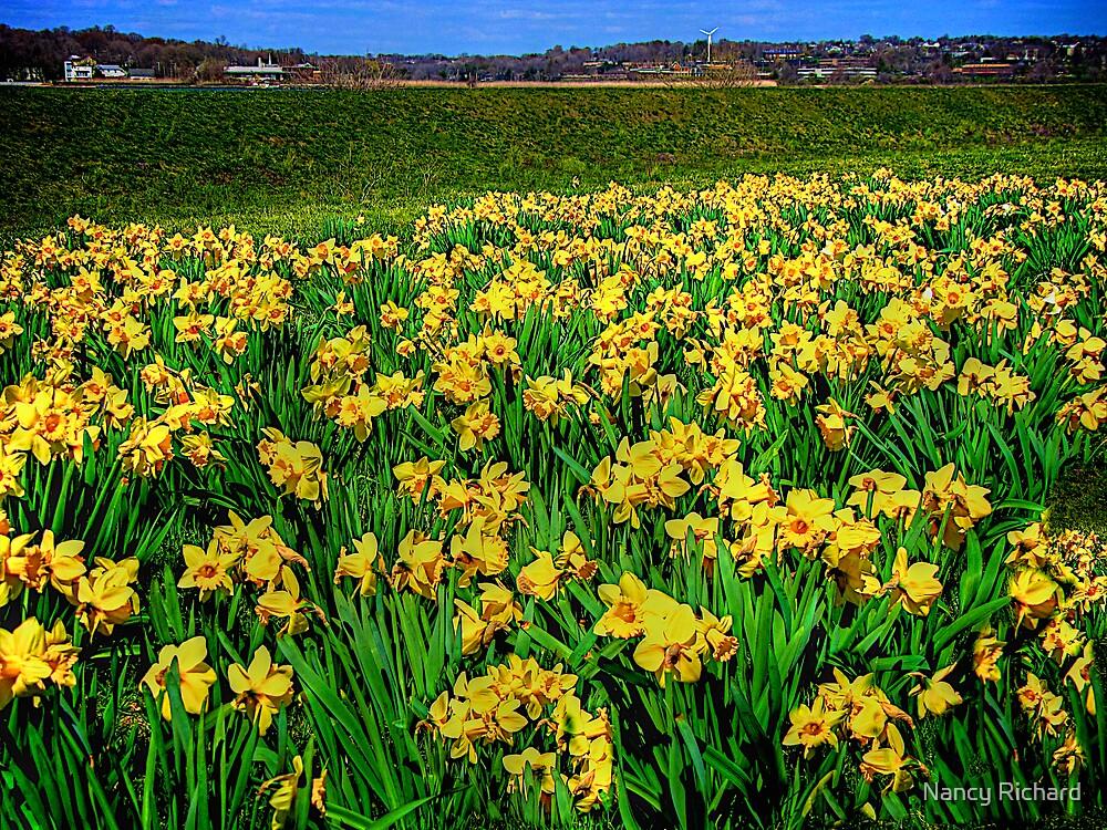 "Going ""Daffy"" For Spring by Nancy Richard"
