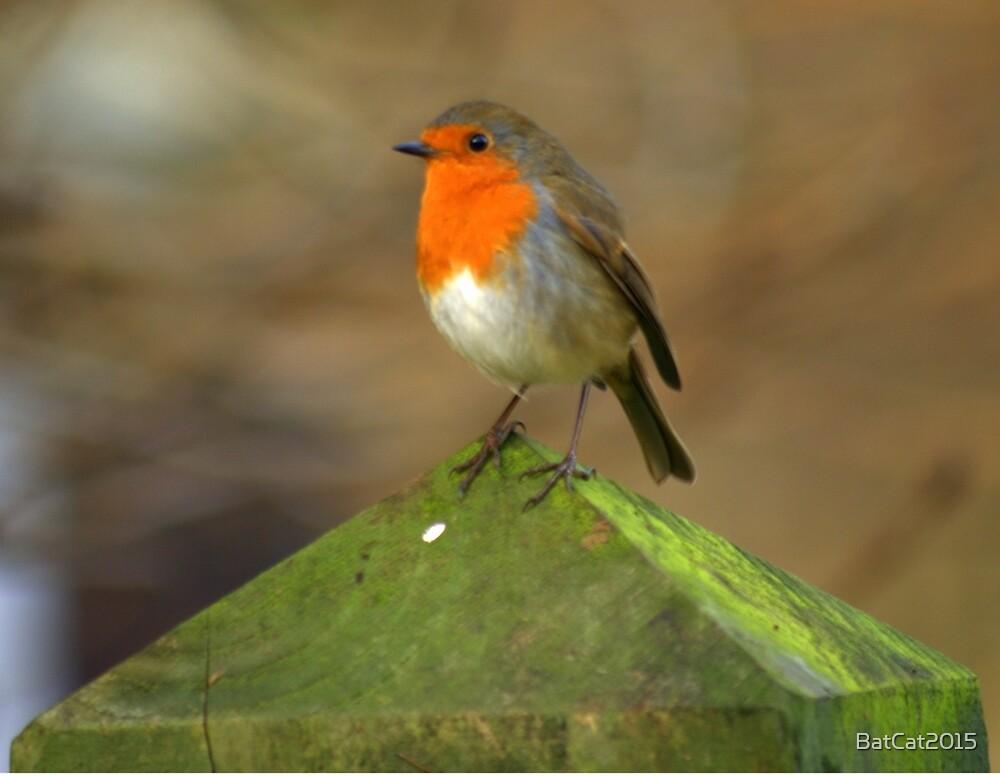 Winter Robin by BatCat2015