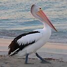 Pelican by looneyatoms