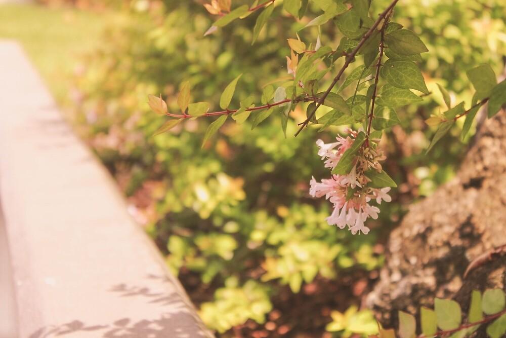 Pink Flowers by yasminsphotos