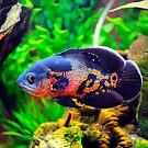 Oscar The Fish by Bill Fonseca