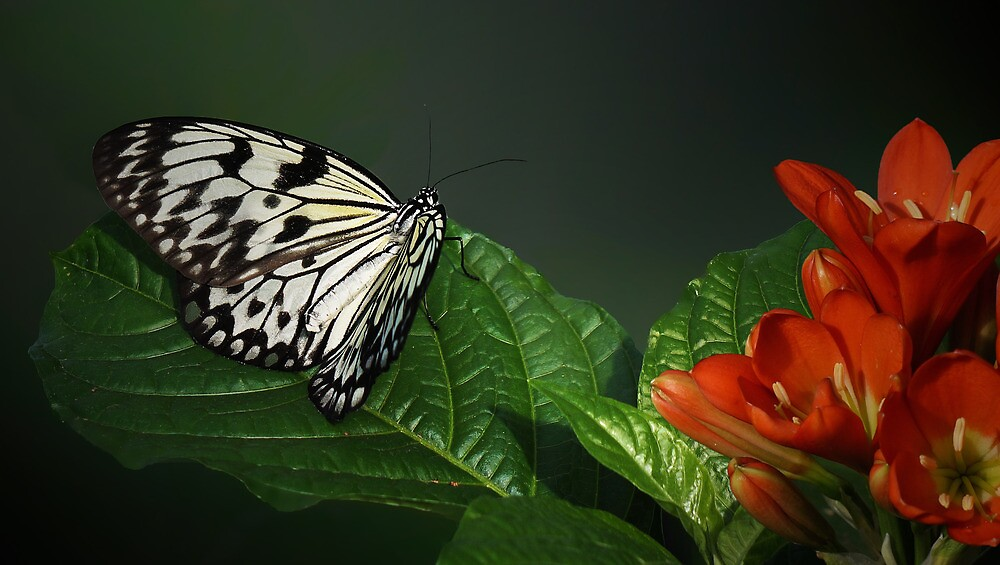 Rice Paper Butterfly by sunshine65