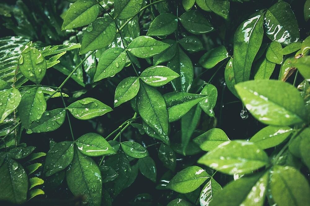 Sweet Green by yasminsphotos