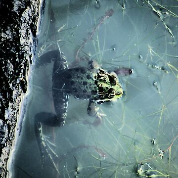 Frog in a pond by MarkusTheLion
