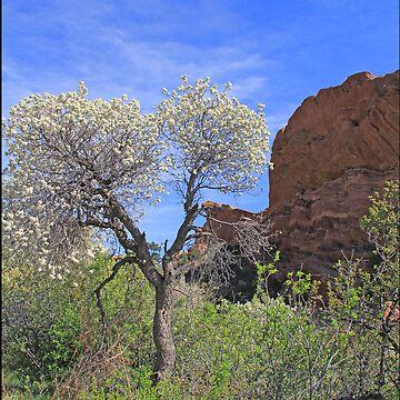 Springtime at Red Rocks by InTheMomentArt