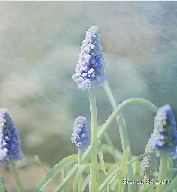 ~ Dreams of Spring ~ by Brenda Boisvert