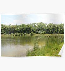 Lakeside Cane Poster