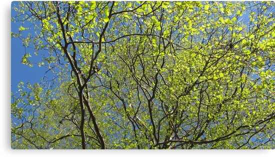 Birch leaf is alive by PVagberg