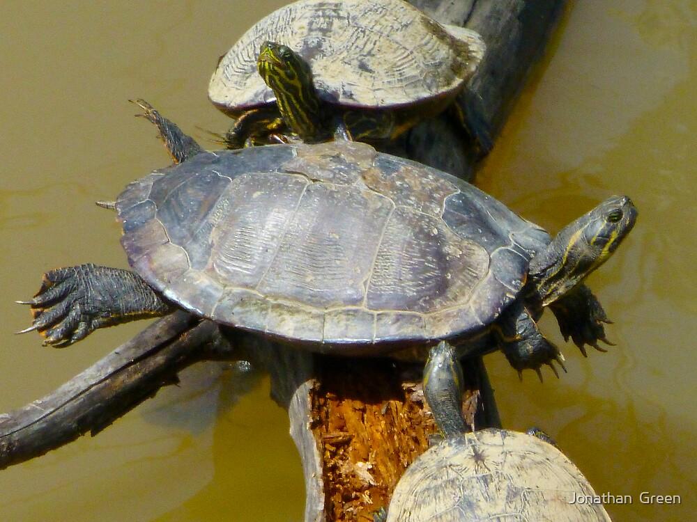 Turtle Balance by Jonathan  Green