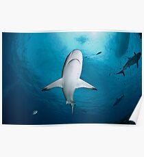 Shark Close Up Poster