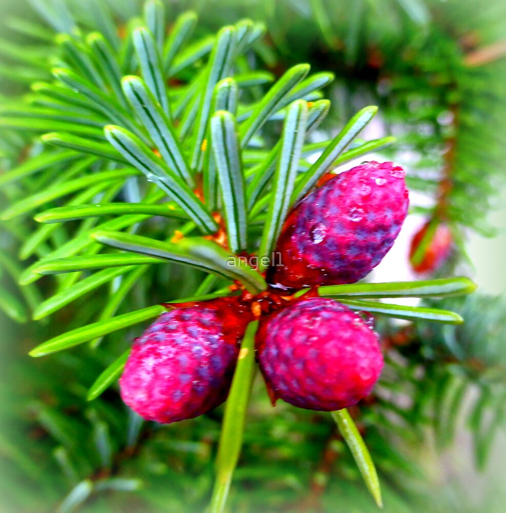 Baby Fir Cones by ©The Creative  Minds