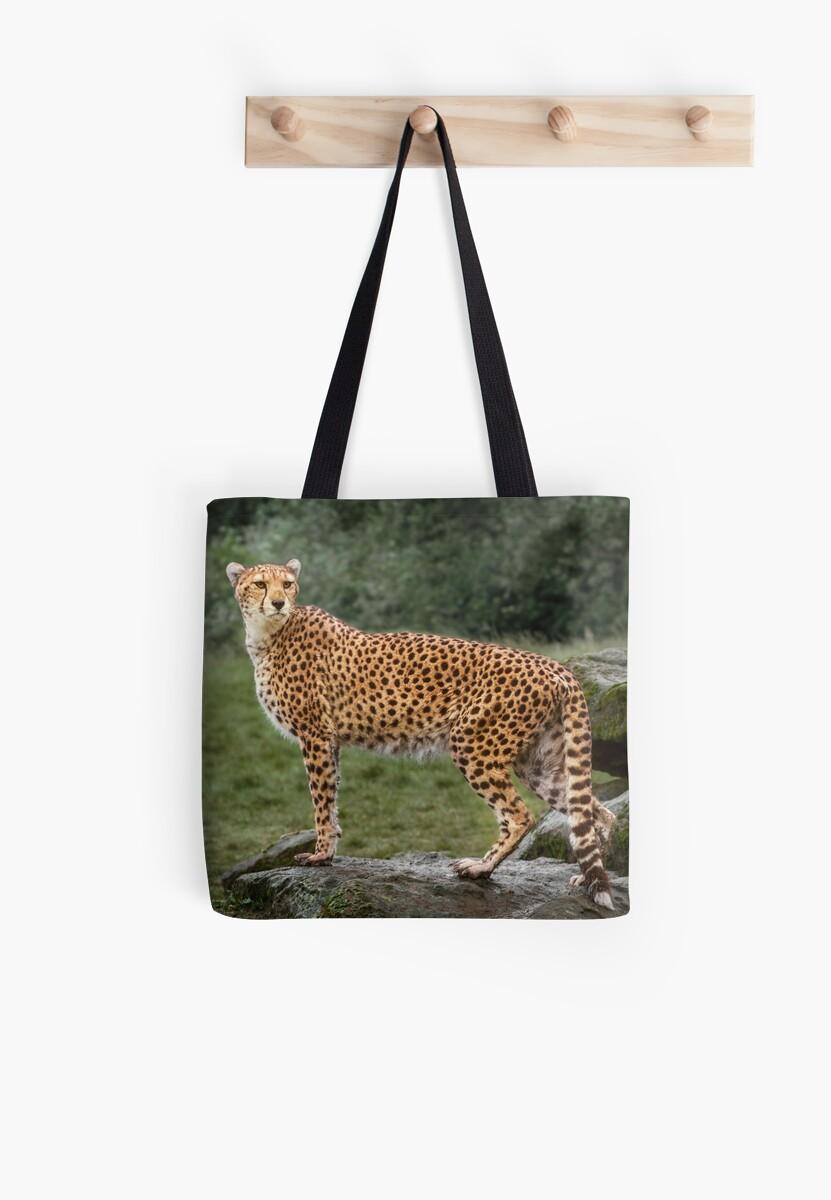 Big Cat Cheetah by Patricia Jacobs DPAGB LRPS BPE4