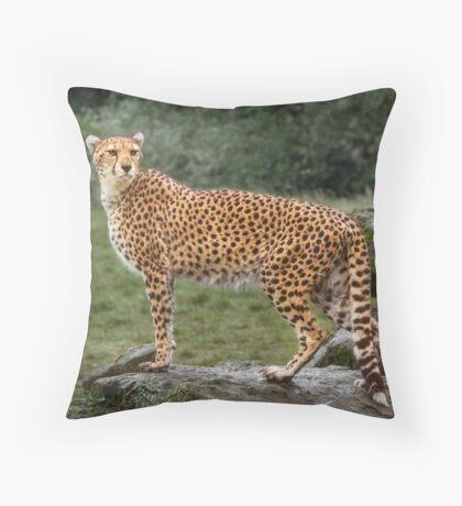 Big Cat Cheetah Throw Pillow