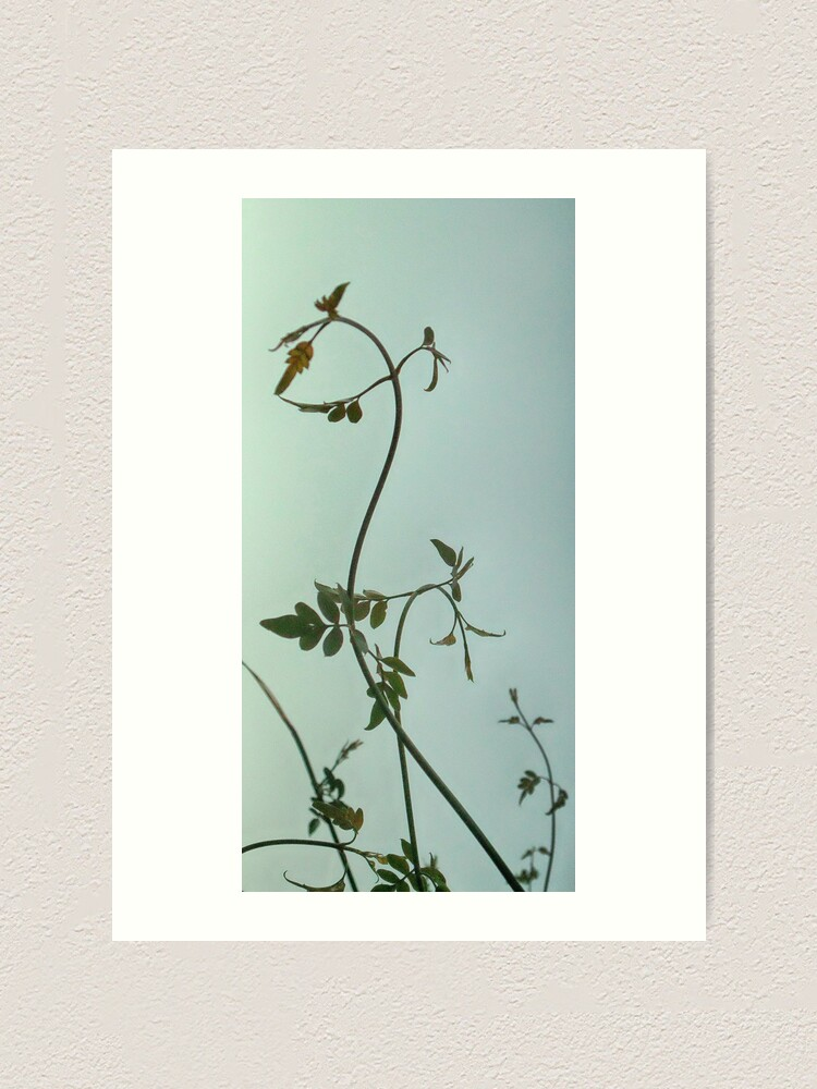 Alternate view of Gently left but pointed north I feel Space is actually that way Art Print