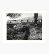 Dog on the Grass Art Print
