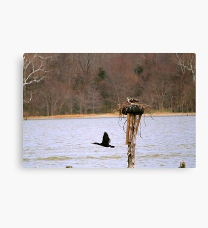 Cormorant Fly-by Canvas Print