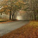 AUTUMN COLOURS MT WILSON NSW  by Bev Woodman