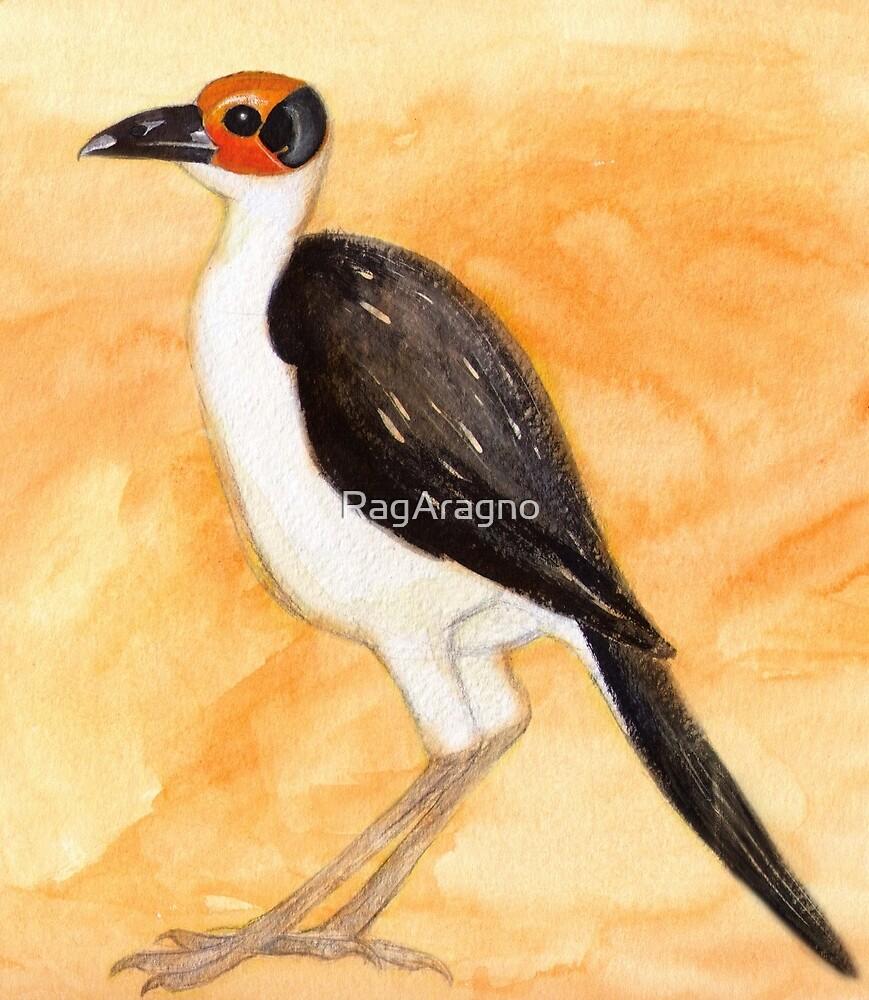 White-Necked Rockfowl by RagAragno