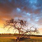 A Moorooduc Morning by Nick Skinner