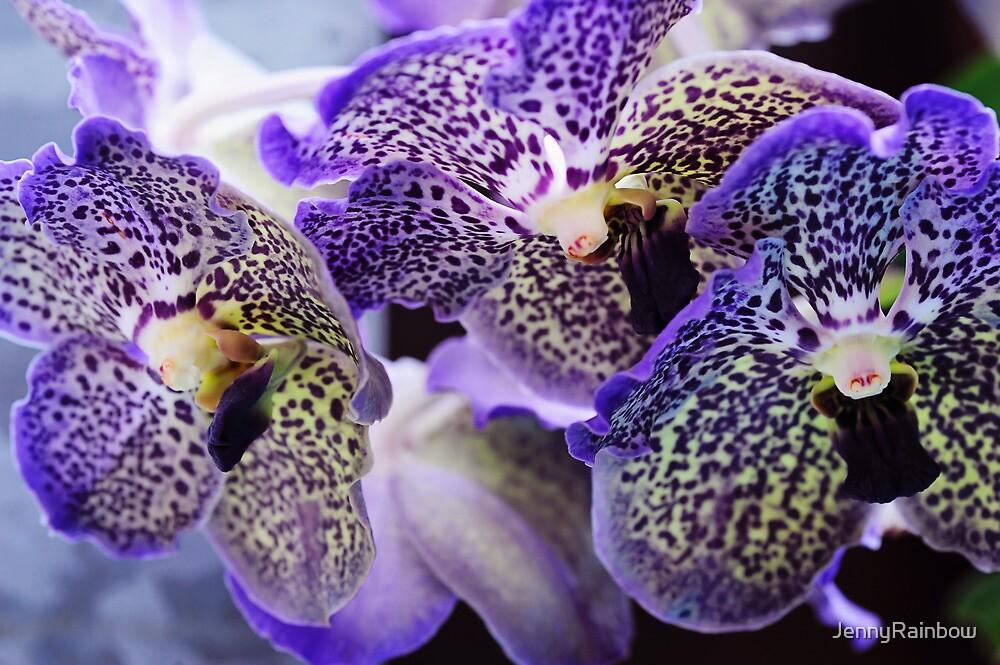 Aliens. Orchids from Keukenhof. Netherlands by JennyRainbow